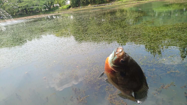 釣具商 安藤商会